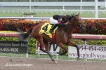 Awesome Feather (FL) wins 9 for 9 in the Florida Sunshine Millions Distaff Stakes